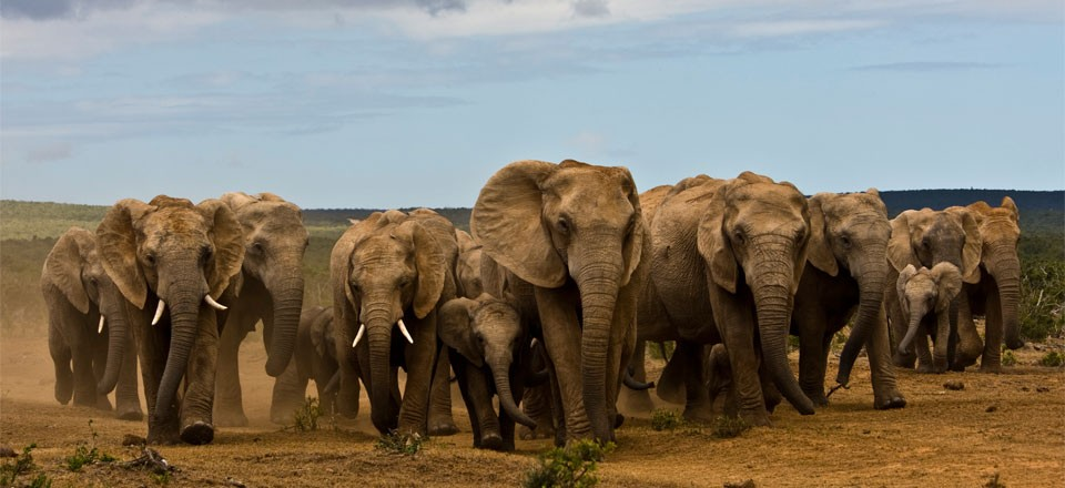 223_addo-elephant-park-001-960x440