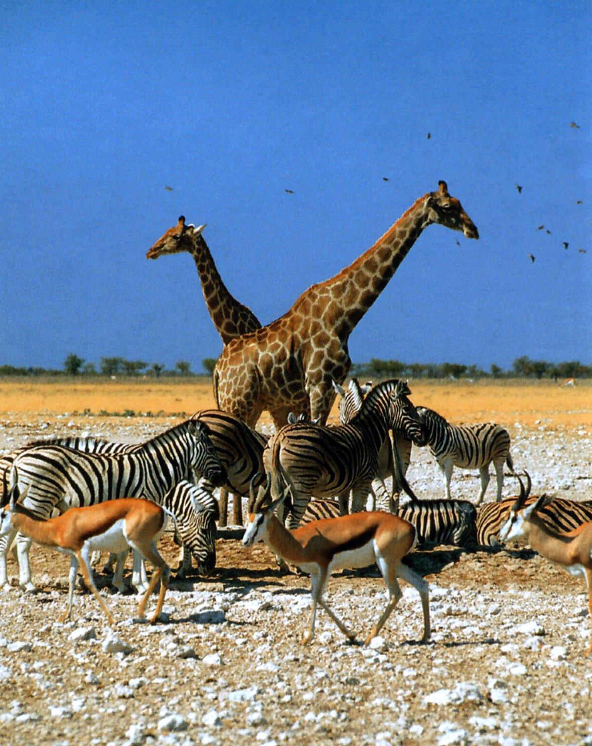 Namibia-Menagerie