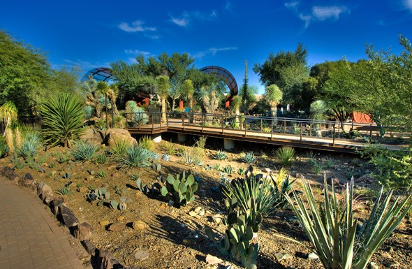 desert-berlin-agave-yucca-f-1304363045
