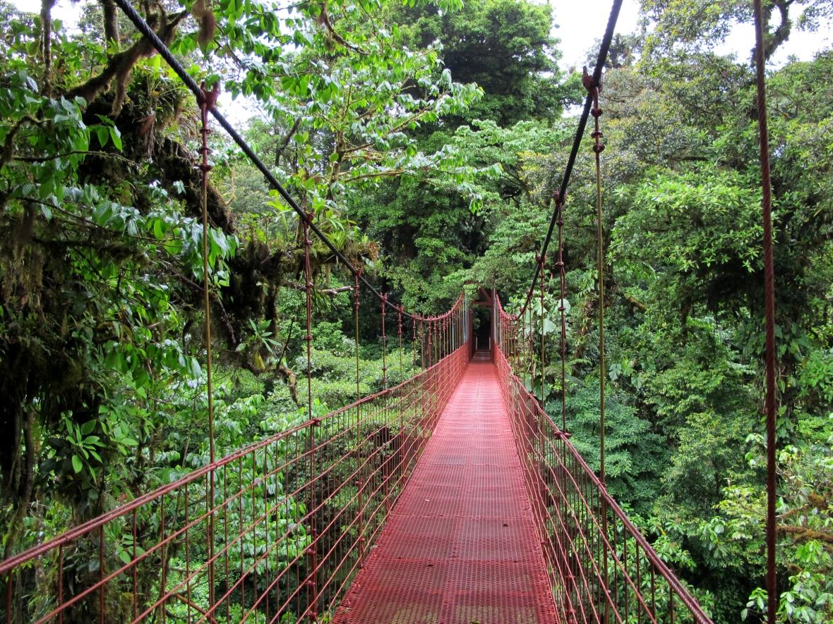 Monteverde_puente