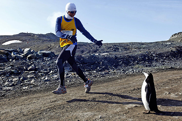 A runner looks at a penguin as he takes part in the Antarctic Marathon