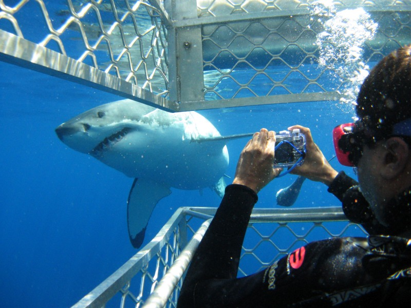 Shark-Diving-around-Seal-Island-South-Africa1